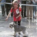 Юный хендлер Королева Саша (7 лет) с цвергшнауцером МИНИ-МАКСИ ХОЛЛИ готовотся к выходу в ринг