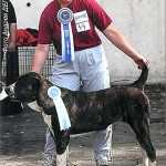 ЕНИШ ОРЗУ - лучший юниор , Юный Победитель НПК