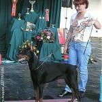 Лучший щенок выставки доберман С