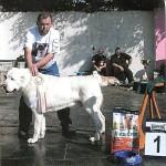 РАВШАН - Победитель рабочего класса, Победитель НКП, ЛПП на всепородной выставке
