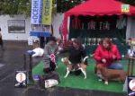"""Конкурс выставки """"Осенняя легенда 2015"""" в шестой группе собак - гончие и родственные породы."""